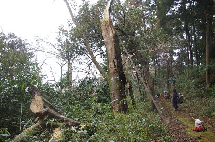 雨中、3人で決行!:11月六国見山森林公園の定例手入れ_c0014967_14584747.jpg