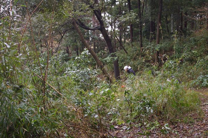 雨中、3人で決行!:11月六国見山森林公園の定例手入れ_c0014967_1542278.jpg
