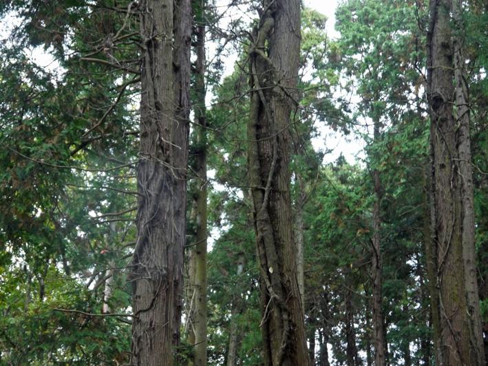 雨中、3人で決行!:11月六国見山森林公園の定例手入れ_c0014967_155996.jpg
