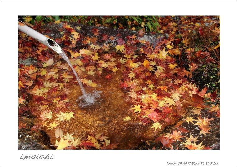 濡れ落ち葉_c0054876_1626520.jpg