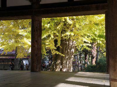 長床の銀杏の木_a0096989_21582217.jpg