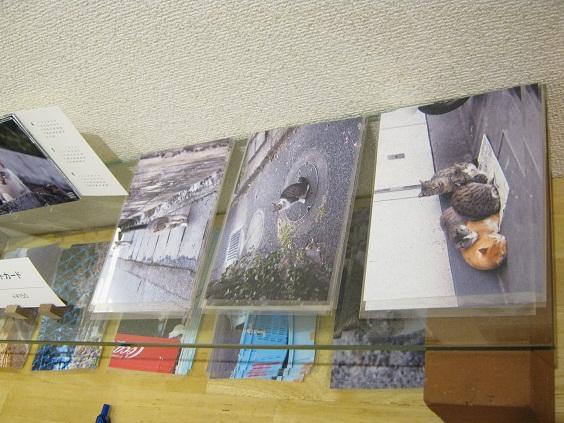 たまごの工房企画 「高円寺裏通り猫展」 その5_e0134502_1611568.jpg