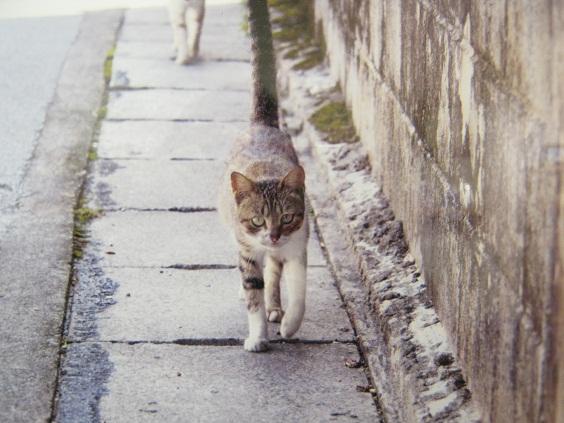 たまごの工房企画 「高円寺裏通り猫展」 その5_e0134502_1625649.jpg