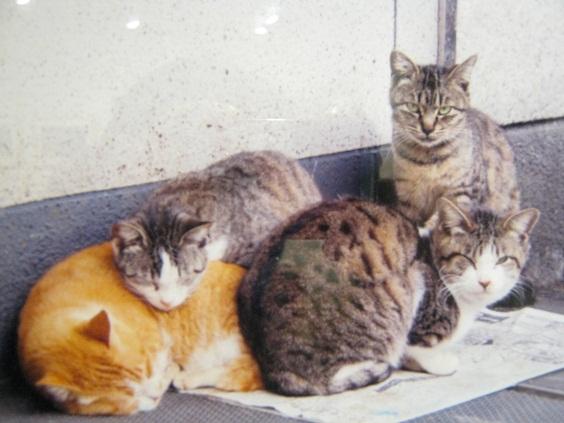 たまごの工房企画 「高円寺裏通り猫展」 その5_e0134502_1674048.jpg