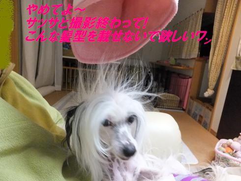 f0179203_7134866.jpg