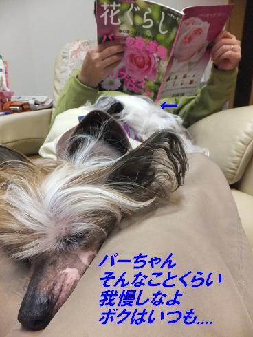 f0179203_7384411.jpg