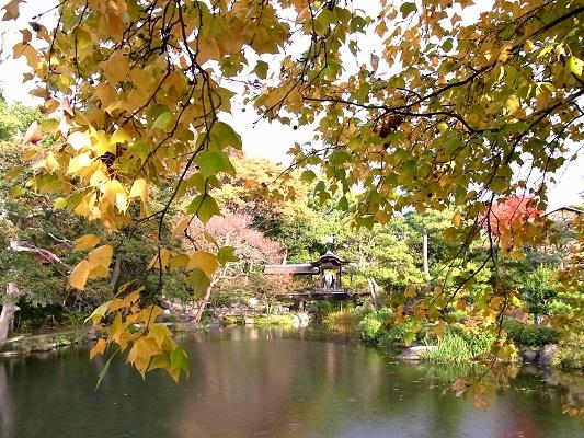 秋の京都・渉成園_c0192215_859484.jpg