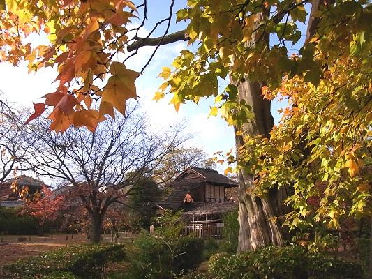 秋の京都・渉成園_c0192215_859592.jpg