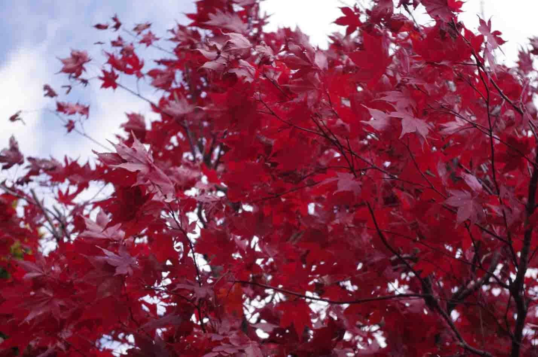 秋(やっと)深し_b0117718_1149835.jpg