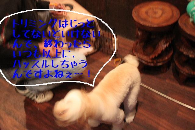 b0130018_21433981.jpg