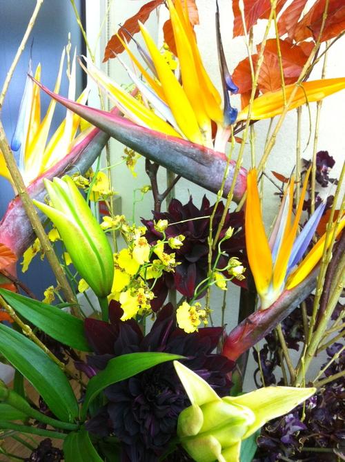 今週のお花とセール情報_a0200423_20355240.jpg
