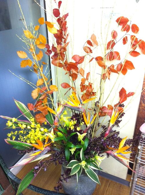 今週のお花とセール情報_a0200423_20362821.jpg