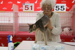 TICA&AJC CAT SHOW_f0168339_20104819.jpg