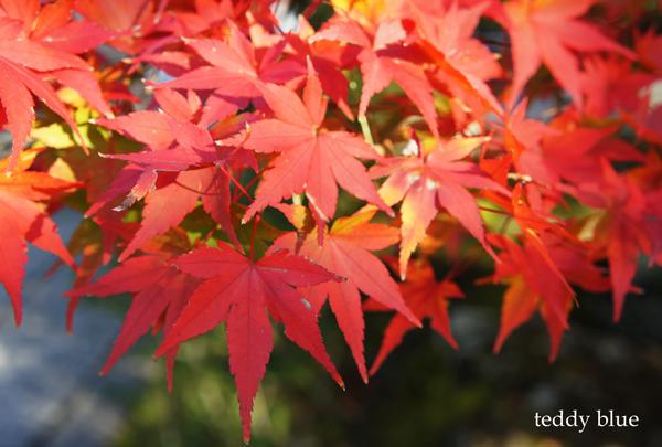 fall walking in Kyoto 2012  秋の京都 紅葉散策_e0253364_1302266.jpg