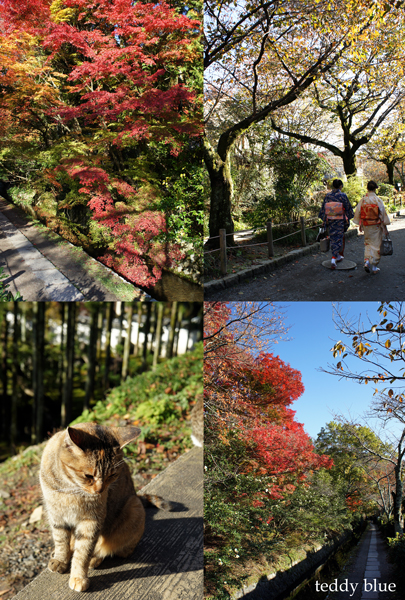 fall walking in Kyoto 2012  秋の京都 紅葉散策_e0253364_1442435.jpg