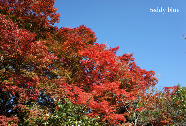 fall walking in Kyoto 2012  秋の京都 紅葉散策_e0253364_15184745.jpg