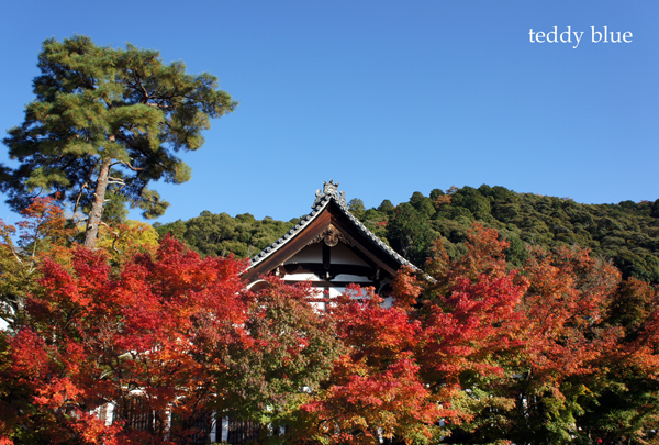 fall walking in Kyoto 2012  秋の京都 紅葉散策_e0253364_15202944.jpg
