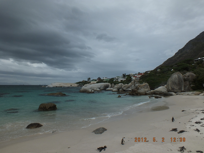 Africa-28 ボルダーズ・ビーチのベンギン / Penguins of Boulders Beach_e0140365_20394551.jpg