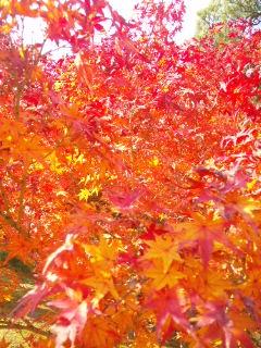 京都の紅葉♪_c0164268_20423639.jpg
