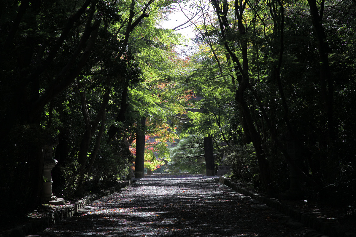 紅葉 2011  西山  大原野神社_f0021869_0121369.jpg