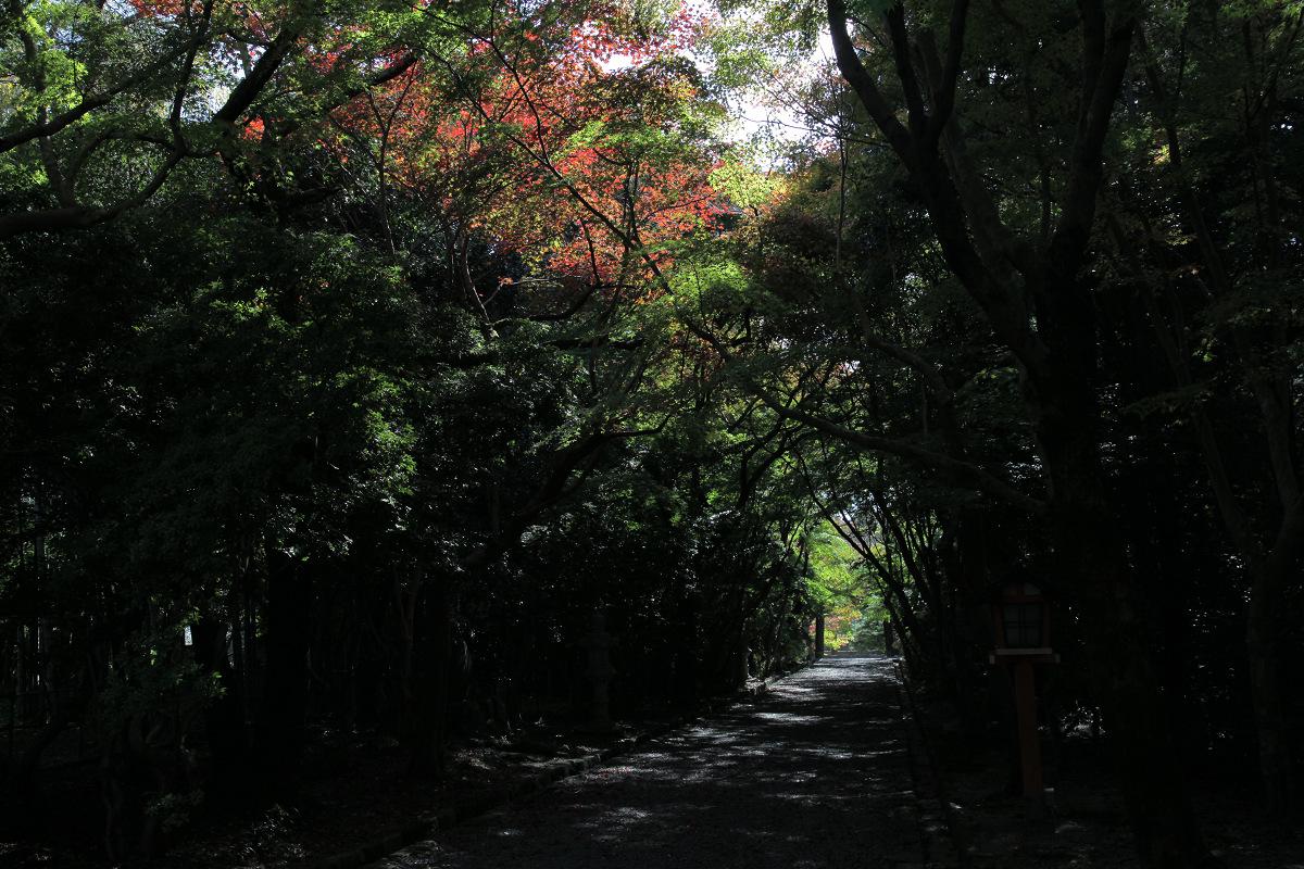 紅葉 2011  西山  大原野神社_f0021869_01427.jpg