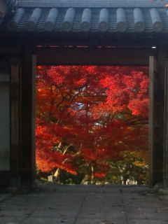 紅葉散策_f0200477_64565.jpg