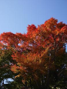 紅葉(こうよう)見頃です!_f0226293_882638.jpg