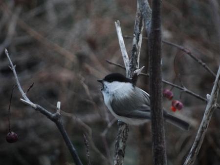 野鳥の季節_e0120896_6464247.jpg