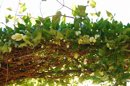 秋のボタニックガーデン : シルホサ編_c0124100_17481081.jpg