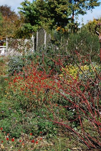 秋のボタニックガーデン : 秋の花、風景編_c0124100_18291486.jpg