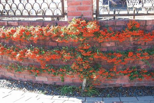 秋のボタニックガーデン : 秋の花、風景編_c0124100_18293123.jpg