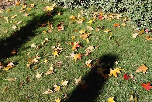秋のボタニックガーデン : 秋の花、風景編_c0124100_18301292.jpg