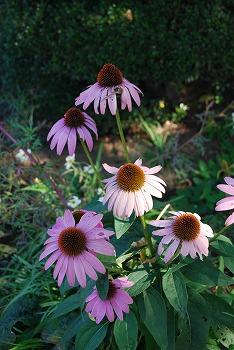 秋のボタニックガーデン : 秋の花、風景編_c0124100_18302729.jpg