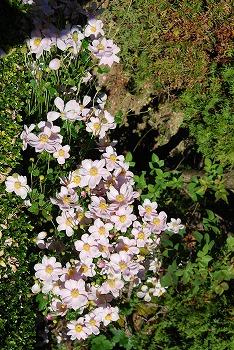 秋のボタニックガーデン : 秋の花、風景編_c0124100_18303769.jpg