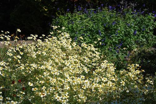 秋のボタニックガーデン : 秋の花、風景編_c0124100_1830390.jpg