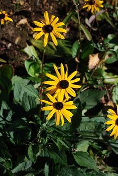 秋のボタニックガーデン : 秋の花、風景編_c0124100_18305517.jpg