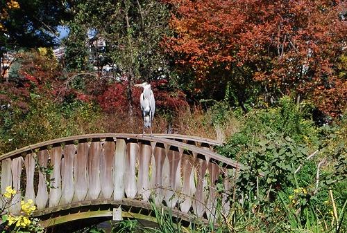 秋のボタニックガーデン : ウッドランド編_c0124100_183114.jpg