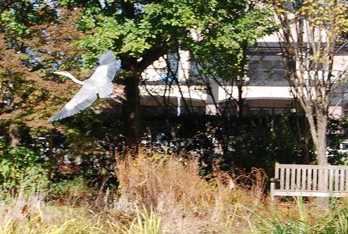秋のボタニックガーデン : ウッドランド編_c0124100_1833210.jpg