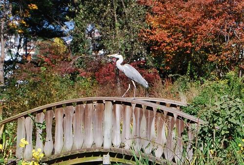 秋のボタニックガーデン : ウッドランド編_c0124100_184081.jpg