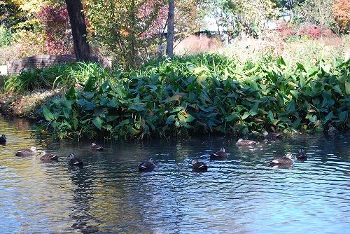 秋のボタニックガーデン : ウッドランド編_c0124100_1845323.jpg