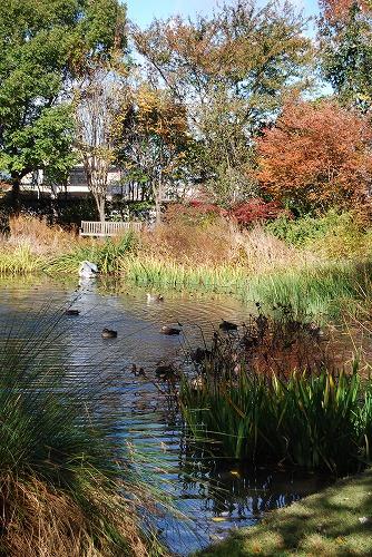 秋のボタニックガーデン : ウッドランド編_c0124100_1852827.jpg