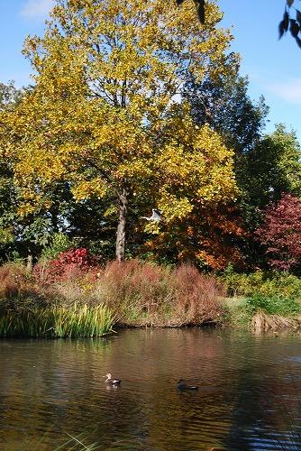 秋のボタニックガーデン : ウッドランド編_c0124100_1854027.jpg