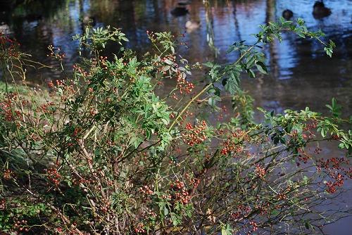 秋のボタニックガーデン : ウッドランド編_c0124100_1855197.jpg