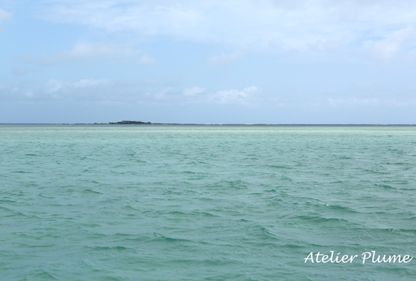 Hawaii☆ 〜天国の海〜_e0154202_22305335.jpg