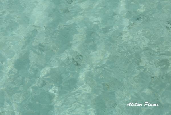 Hawaii☆ 〜天国の海〜_e0154202_2232789.jpg