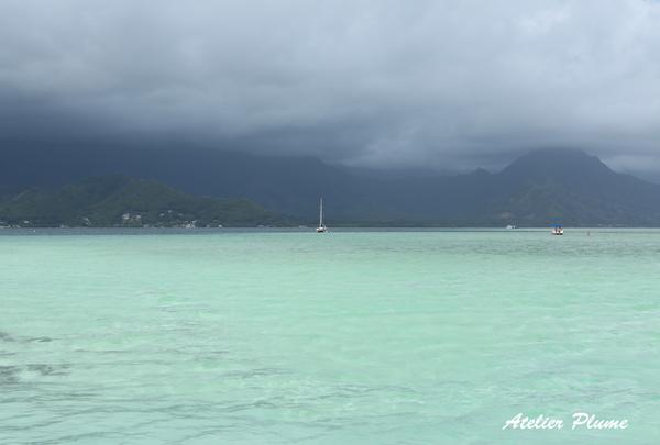 Hawaii☆ 〜天国の海〜_e0154202_2233361.jpg