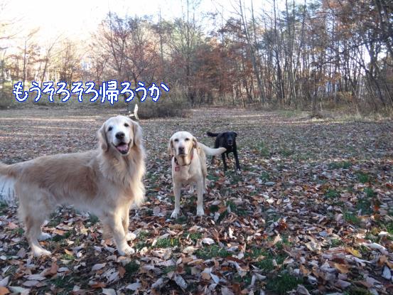 f0064906_168439.jpg