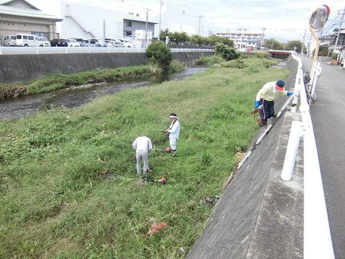 小潤井川の菜の花と、打ち上げられたたくさんの魚_f0141310_7533240.jpg