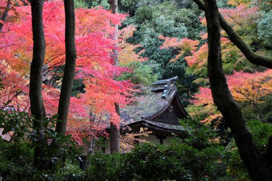 紅葉だより32 上賀茂神社_e0048413_180133.jpg