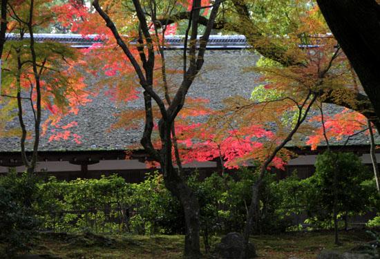 紅葉だより32 上賀茂神社_e0048413_1801355.jpg